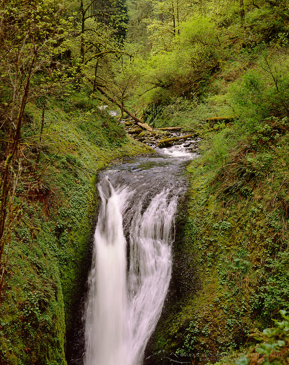 Waterfall in Oneonta Gorge, Columbia River Gorge National Scenic Area Oregon USA