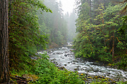 The Skokomish River on a rainy summer day in Olympic National Park, Washington, USA.
