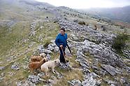 Shepherds daily life