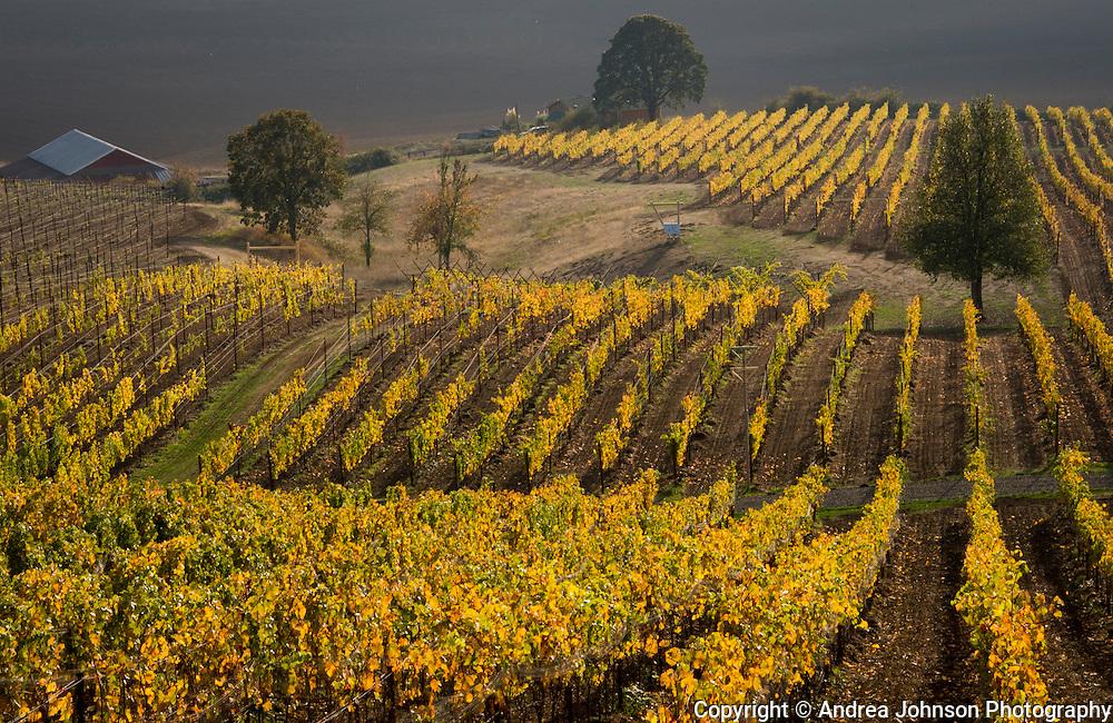 Keeler Estate Vineyard, Eola-Amity AVA, Willamette Valley, Oregon