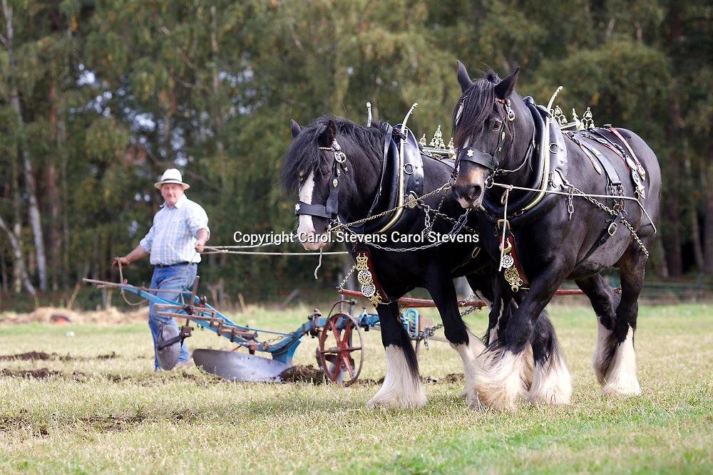 Working Horse Festival at Osberton Horse Trials 2017