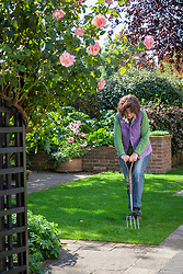 Aerating a lawn with a fork to promote drainage.