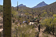Visitors explore the Desert Loop Trail at the Arizona-Sonora Desert Museum, Tucson, Arizona, USA.