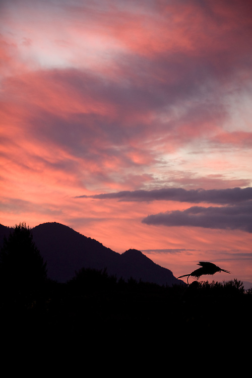 Sunset and sculpture, Lake Llanquihue, Chile