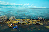 PRT, Portugal: Oceanario de Lisboa, das zweitgroesste seiner Art weltweit,  Lebensraum Indischer Ozean, Taucherin putzt die kuenstlichen Korallen des Korallenriffs, auch der weite Ozean ist Fake in Form einer Wandtapete, Lissabon, Lissabon   PRT, Portugal: Oceanario de Lisboa, the second largest world wide, habitat Indian Ocean, female diver cleaning man-made corals of the reef, the wide ocean is a fake in therms of a wallpaper, Lisbon, Lisbon  