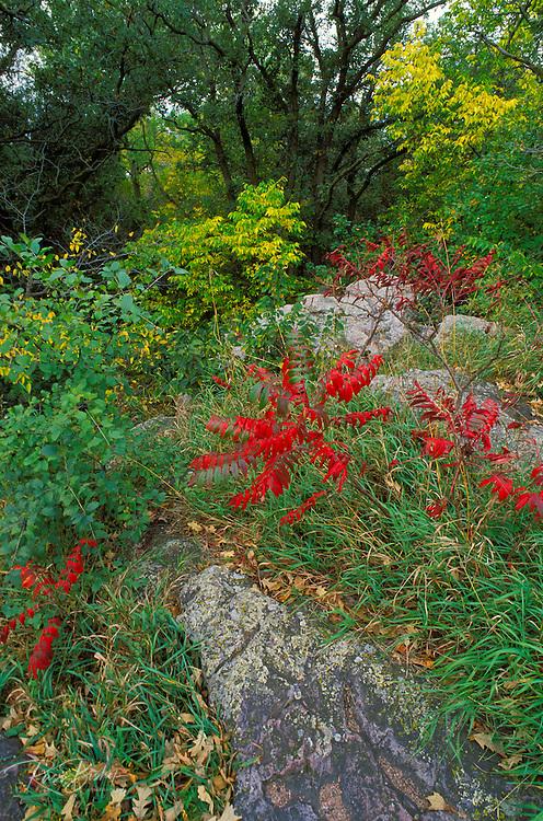 Red fall sumac and Sioux Quartzite, Pipestone National Monument, Minnesota