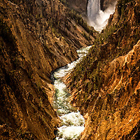 Observing the Lower Falls through the eye of these towering trees enhances the majestic nature of Yellowstone.