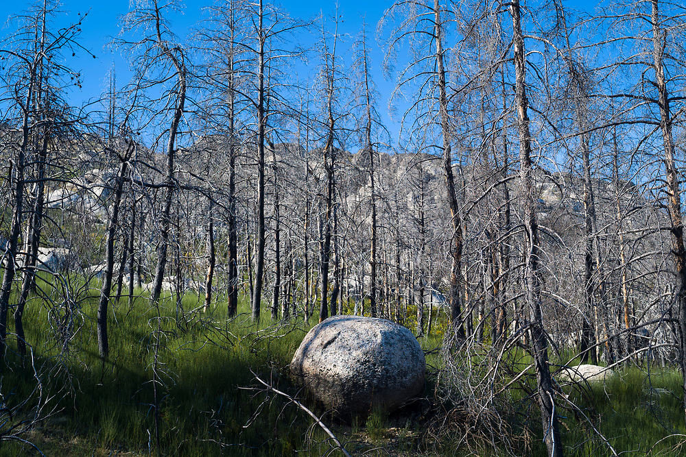Serra da Estrela mountain range in the Natural Park. Glacial erratics boulders and burnt conifers damaged by fire in dramatic wildfire of 2017 in Portugal.