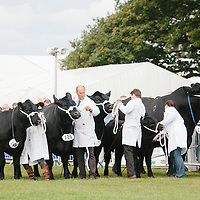 Royal Highland Show 2014 United Auctions