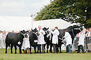 Royal Highland Show 2014. Cattle interbreed teams competition. PAYMENT TO CRAIG STEPHEN 07905 483532