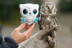 © Licensed to London News Pictures. 13/11/2019. London, UK. An Owleez owl next to an owl at the Bastian Top 12 Christmas DreamToys. Photo credit: Ray Tang/LNP