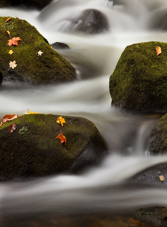 An intimate shot of freshly fallen leaves on moss covered rocks in a Vermont stream.