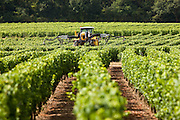Vine tractor crop-spraying vines in a vineyard at Parnay, Loire Valley, France
