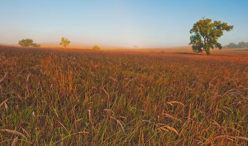 Autumn morning  as the fog lifts at the Tall Grass Prairie Preserve,Kansas