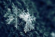 """PRINTS:  """"Let it Snow: A Winter's Flake"""""""