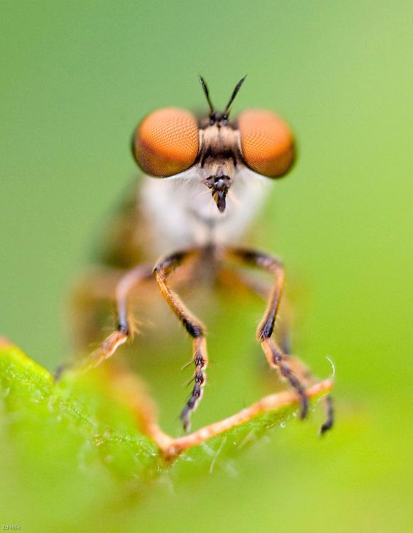 Bug. ©Ed Hille