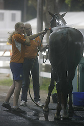 Horse care<br />