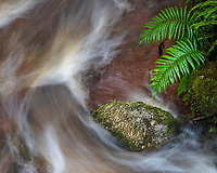 A small stream running through the forest in Kahurangi National Park, South Island, New Zealand.