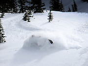 Jason King carves a line of powder turns on his Skidoo in the Tetons Spring 2011