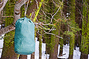 Ursack bear-proof food storage container hanging from a branch, Sequoia National Park, California
