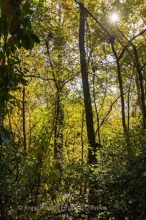 Sunshine through trees Cave Spring Interpretive Center