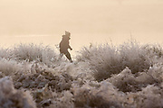 UNITED KINGDOM, London: 08 November 2016. A walker braves the frost during sunrise this morning in Richmond Park. Rick Findler / Story Picture Agency