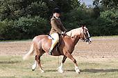 Class 39 - Novice Ridden Horse & Pony