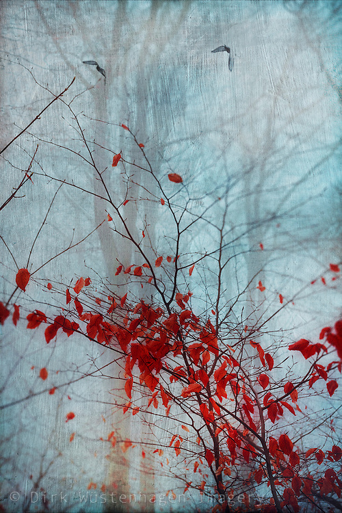 Red leaves on a tree in a misty forest - texturized photograph