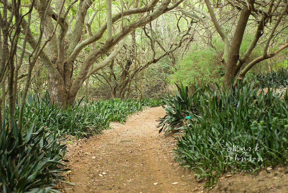 Koko Crater Botanical Garden, Honolulu, Oahu, Hawaii