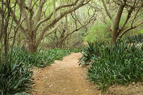 Koko Crater Botanical Garden, Honolulu, Oahu, Hawaii.