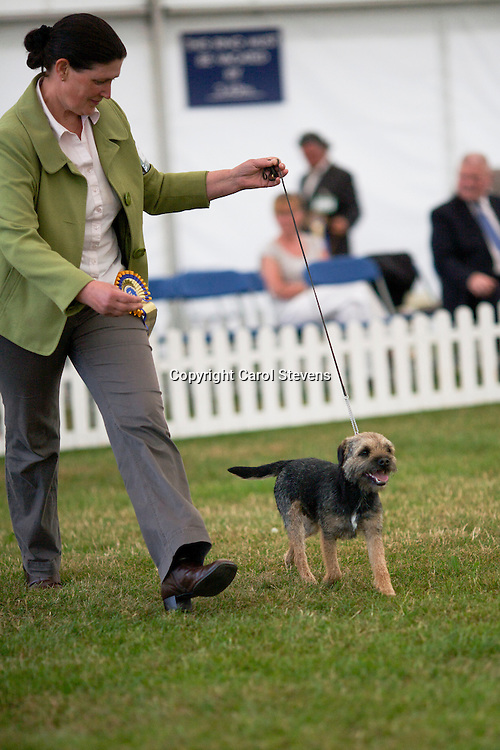 Glebeheath Jump The Gun JW<br /> Mrs C J Guvercin<br /> Border Terrier
