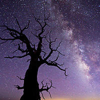 I escaped into the White Mountains and waited for the night sky. There were only two of us there and then he left leaving me all alone with the four thousand year old Bristlecone pine trees. I found a really cool one and took its picture as the Milky Way came into focus as so did my world.