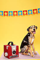 Smooth haired black and tan dog full length next to a red glittered Brownie Camera against yellow seamless. Photographed at the Photoville Photo Booth September 20, 2015