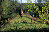 Horse riding in the countryside, near bellac le chateau, limousin,france   /  randonnee a cheval a bellac le chateau dans le limousin