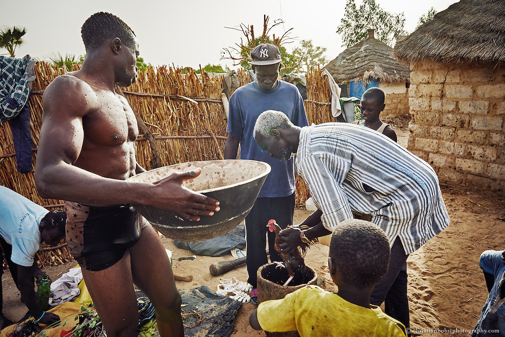 April 1, 2016. In Djilass, a small village in the district of Thiès, a Marabout performs a Gris-gris ritual by washing a chicken in the water in order to produce a magic potion.  All the wrestler use several magic potions which they poor over their bodies before the fights. The ones who win every fight are actually the Marabouts, which are always well paid for the talismans and magic potions by the fighters.