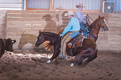 September 24, 2017 - Minshall Farm Cutting 6, held at Minshall Farms, Hillsburgh Ontario. The event was put on by the Ontario Cutting Horse Association. Riding in the Open Class is Eric Van Boekel on Nister Boss Hog owned by the rider.