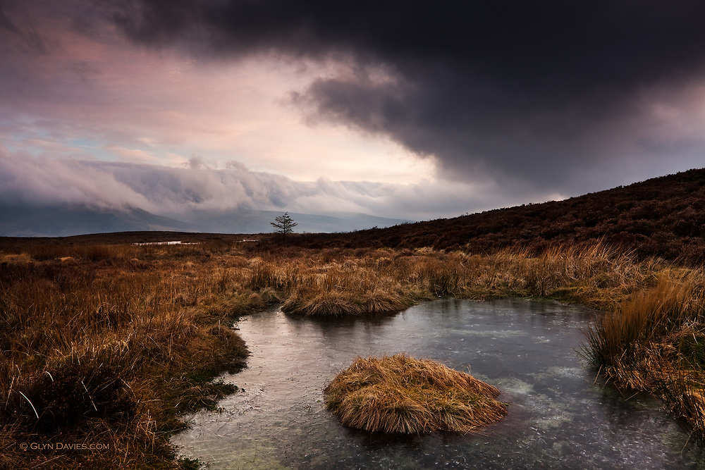I had spent the afternoon surrounded by thick hill fog on the summit of Mynydd Mawr this winter, and the wind was bone chillingly cold. On the col between Mynydd Mawr and Moel Tryfan frozen lakes were surrounded by deceptively warm looking grasses, intensified further by the pinks and mauves up-lighting the low clouds over Nantlle. In reality everything was crunchilly icy and the grasses seemed like they would snap when you touched them, but amazingly, under the thick layer of pool ice, life was still surviving in the darkness.