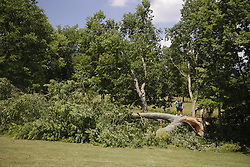 A storm left trees down at the Lee Lodge, Saturday, June 25, 2016 in Bardstown.