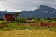 Farming, El Moncada, Pinar del Rio, Cuba.