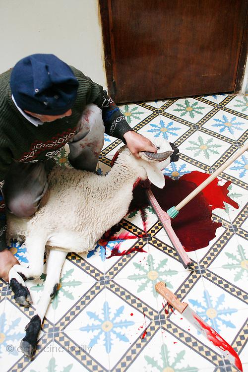 Marrakech, Maroc. 21 Decembre 2007..Aid El Kebir est une des fetes les plus importantes de l'Islam. ..Marrakesh, Morocco. December 21st 2007..The butcher cut the sheep's throat to celebrate Eid Al-Adha. Eid Al-Adha is one of the most important celebrations in the Islam traditions.