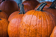 A chill October rain adds a glossy sheen to the bright orange pumpkins at a rural farm stand.<br /> <br /> For IMAGE LICENSING just click on the &quot;add to cart&quot; button above.<br /> <br /> Fine Art archival paper prints for this image as well as canvas, metal and acrylic prints available here: