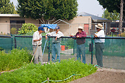 armers discuss their plantings. Stanford Avalon Gardens is a 7.6 acre community farm with over 200 plots. The site was started by farmers dislocated by the loss and bulldozing of the South-Central Urban Farm in 2006. Farmers grow many different fruits and vegetables as well as Mexican herbs and spices such as Halache, Pipicha, Epazote, Papalo and Chipiline. Watts, Los Angeles, California, USA