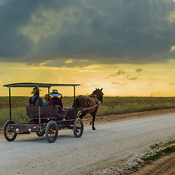 Mennonite family rides a horse carridge at sunset on a dusty road, Little Belize, Belize.
