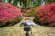 UNITED KINGDOM, London: 10 May 2017 Visitors Vickie Ferguson (left) and Sylvia Heath (right) pose for a picture they have set up themselves amongst thousands of colourful Azaleas in Windsor Great Park this afternoon. Rick Findler / Story Picture Agency