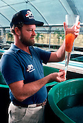 AQUACULTURE, FLORIDA hatchery; Catfish Eggmass in beaker