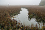 Saltwater tidal marsh in fog on a winter morning in Charleston, South Carolina.