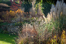 Backlit autumn border with seedheads and grasses including Cortaderia selloana 'Pumila' AGM - Pampas grass.