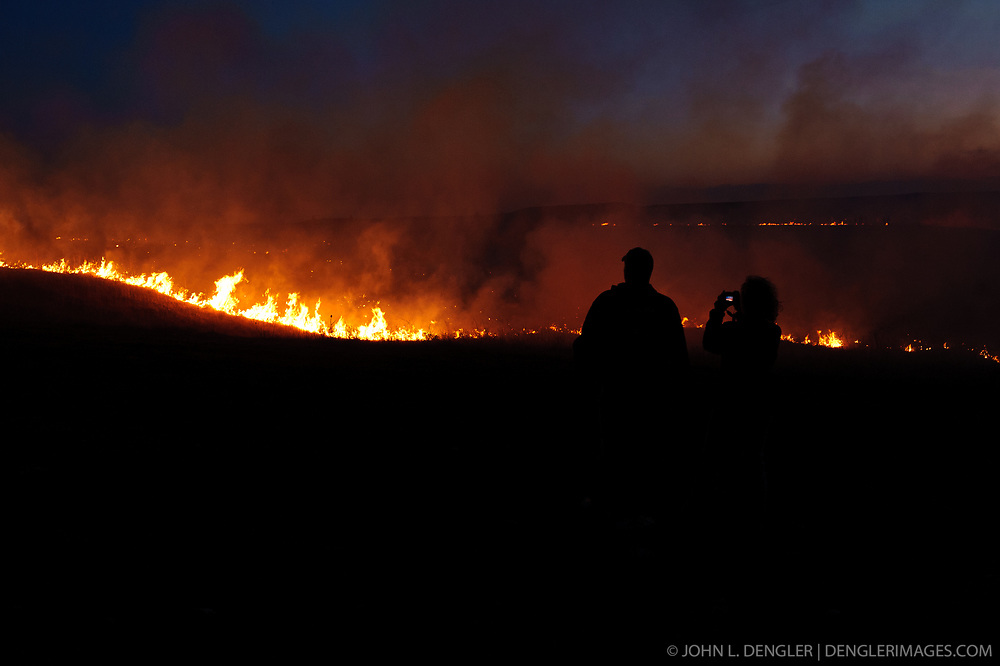 """Unidentified participants at the """"Flames in the Fint Hills"""" observe the burning prairie at the Flying W Ranch near Clements, Kansas. This agritourism event allows ranch guests to take part in lighting the prescribed burns. Prairie grasses in the Kansas Flint Hills are intentionally burned by land mangers and cattle ranchers in the spring to prepare the land for cattle grazing and help maintain a healthy tallgrass prairie ecosystem. The burning is also an effective way of controlling invasive plants and trees. The prairie grassland is burned when the soil is moist but grasses are dry. This allows the deep roots of the grasses to survive and the burned grasses on the soil surface return as nutrients to the soil. These nutrients allow for the rapid growth of new grass. After approximately two weeks of burning, new grass emerges. Less than four percent of the original 140 million acres of tallgrass prairie remains in North America. Most of the remaining tallgrass prairie is in the Flint Hills in Kansas. at the """"Flames in the Fint Hills"""" photographs the burning prairie at the Flying W Ranch near Clements, Kansas. This agritourism event allows ranch guests to take part in lighting the prescribed burns. Prairie grasses in the Kansas Flint Hills are intentionally burned by land mangers and cattle ranchers in the spring to prepare the land for cattle grazing and help maintain a healthy tallgrass prairie ecosystem. The burning is also an effective way of controlling invasive plants and trees. The prairie grassland is burned when the soil is moist but grasses are dry. This allows the deep roots of the grasses to survive and the burned grasses on the soil surface return as nutrients to the soil. These nutrients allow for the rapid growth of new grass. After approximately two weeks of burning, new grass emerges. Less than four percent of the original 140 million acres of tallgrass prairie remains in North America. Most of the remaining tallgrass prairie is in the Flint Hills in"""