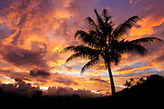 Sunrise and coconut palm tree, Nadi, Viti Levu Island, Fiji.