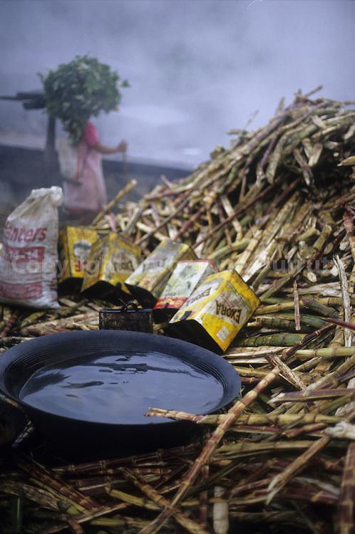 SUGAR CANE, MAINIT, LUZON, THE PHILIPPINES